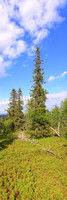 0671 - A - Northern trees - HD